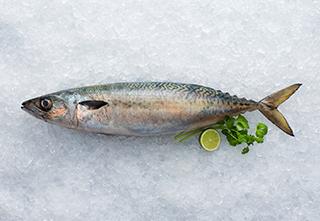 mobile-blue-mackerel-320-221px hi
