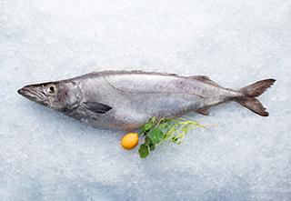 mobile-gem-fish-320-221px hi