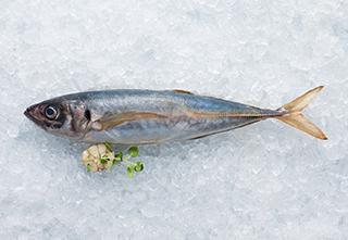 mobile-jack-mackerel-320-221px hi