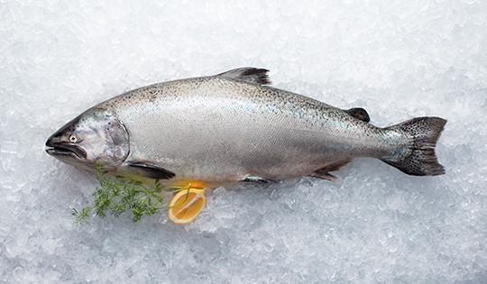 salmon-540x315px