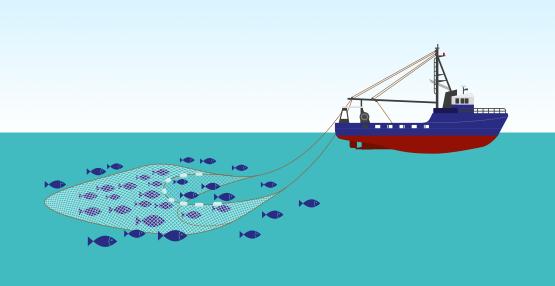 trawler-555px-wide-01 1