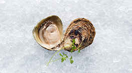 aquaculture-tile-oysters-263x145px