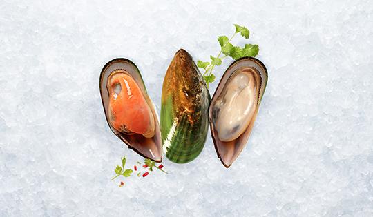 greenshell-mussels-540x315px-hi